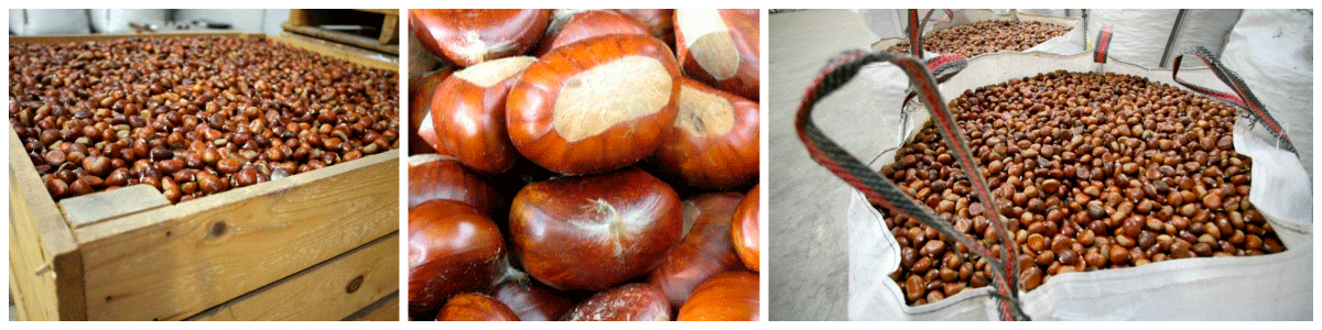 castañas frescas
